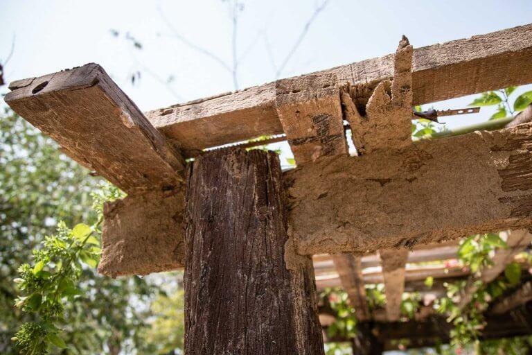 טרמיטים על פרגולה מעץ